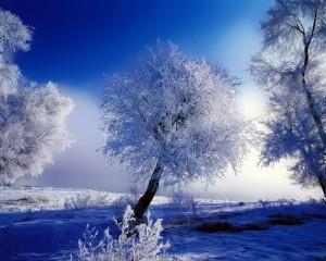 цветотип зима